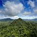 Bosques mundiales