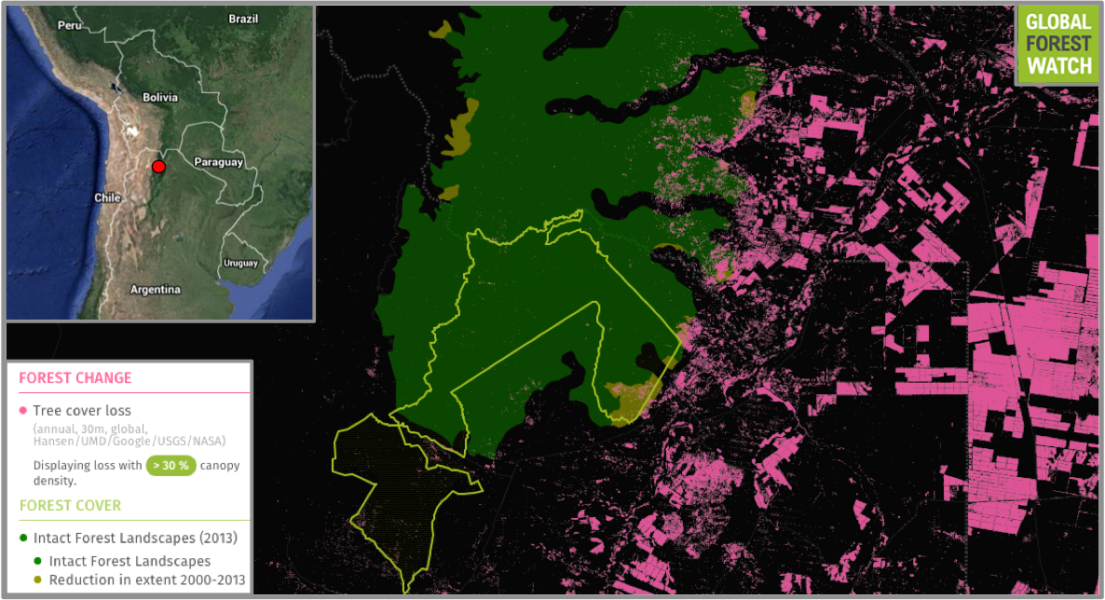 Calilegua Natinal Park (outlined in green) protects one of the region's last remaining Intact Forest Landscapes (IFLs), which are tracts of forest large enough and undisturbed enough to retain their original levels of biodiversity. Data from Global Forest Watch show the IFL region