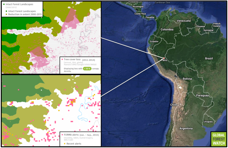 Global Forest Watch shows the plantations were developed in areas characterized by intact forest landscapes (large areas of primary forest) in 2000. Satellite data (via FORMA Alerts) indicate clearing activity in the northernmost plantation was occurring as recently as September.