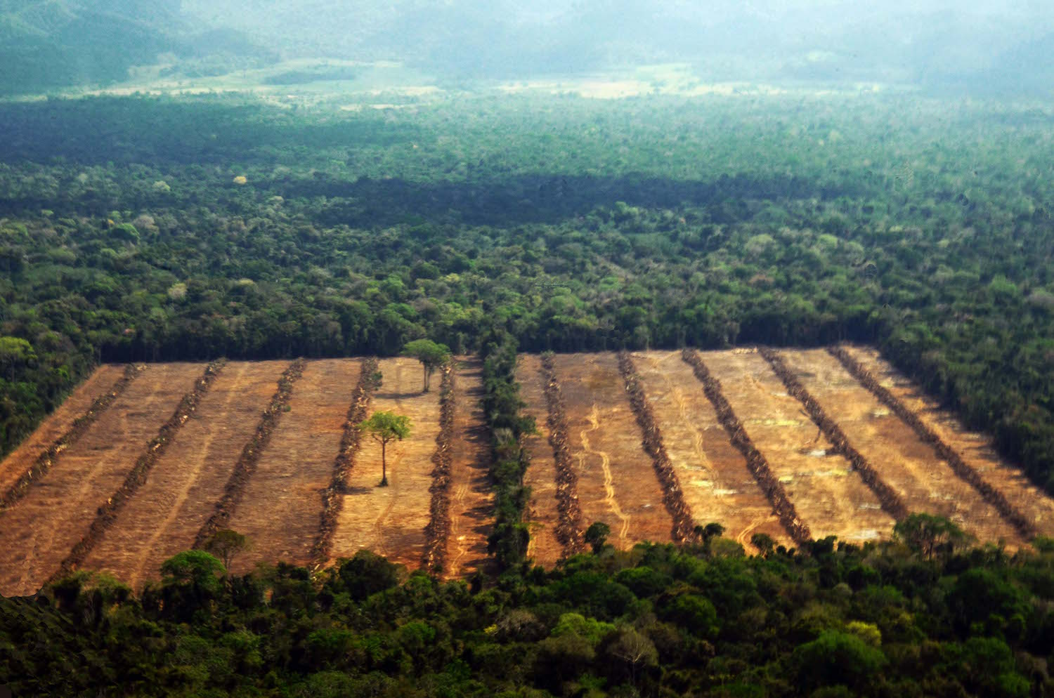 Deforestation around Ingenio San Buenaventura. Photo by Eduardo Franco Berton