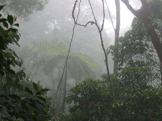 El Gris Panorama De Los Bosques De Niebla En Cundinamarca Colombia
