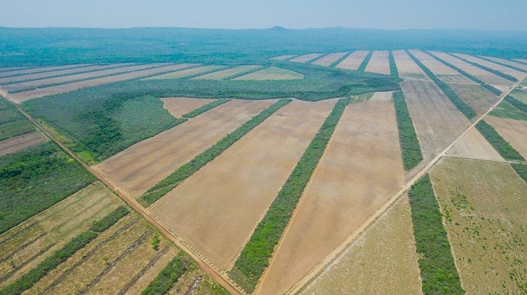 Desafío 2020 Bolivia La deforestación por expansión de la frontera agrícola es uno de los grandes problemas de Bolivia. Foto de Jim Wickens / Ecostorm.