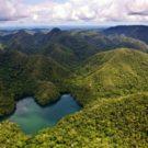 Bosques amazónicos en el Parque Nacional Sierra del Divisor. Foto: Sernanp.