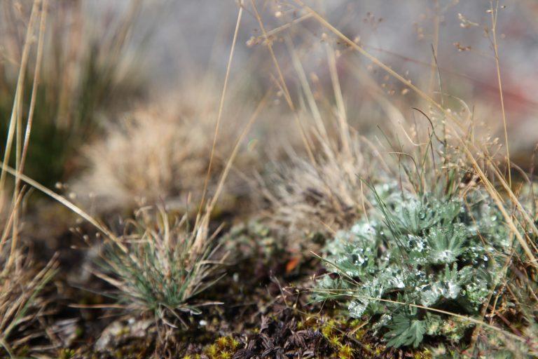 Los ecosistemas de páramo suelen contar con especies únicas de flora que no se encuentran en ningún otro bioma Foto: Agencia de comunicación CONSTRUYENDO REGIÓN.